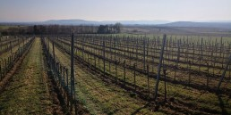 Weingarten Ried Hasel